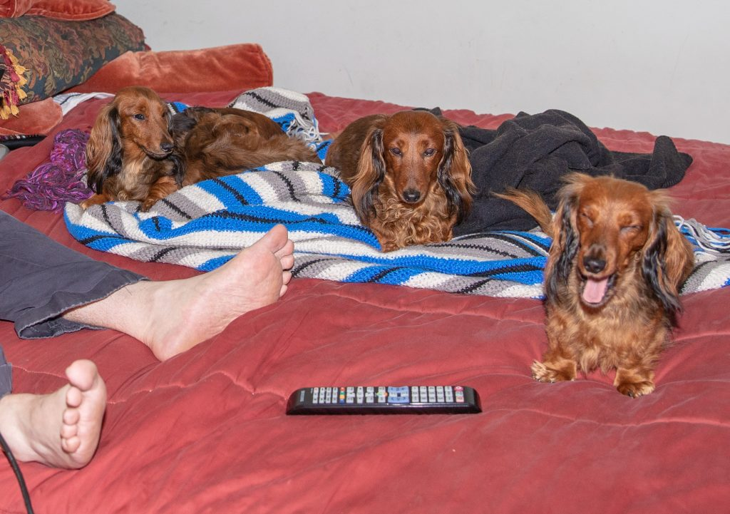 Geoffrey and the pack on the bed