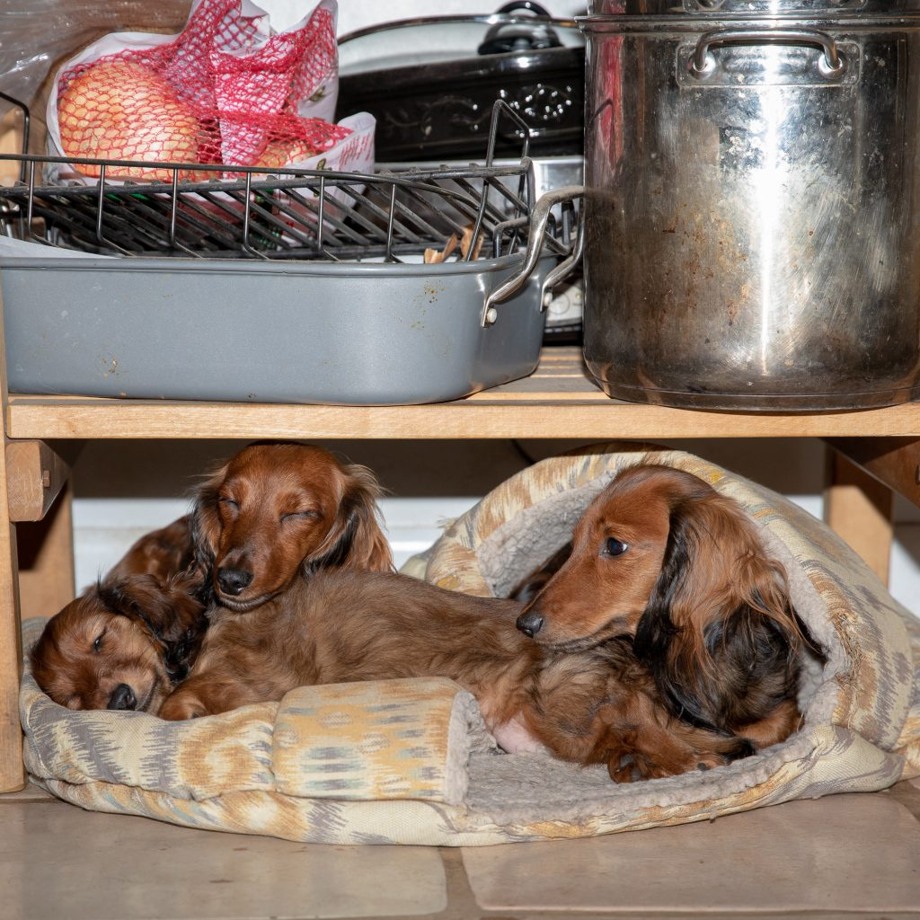 The red girls laying under the butcher block