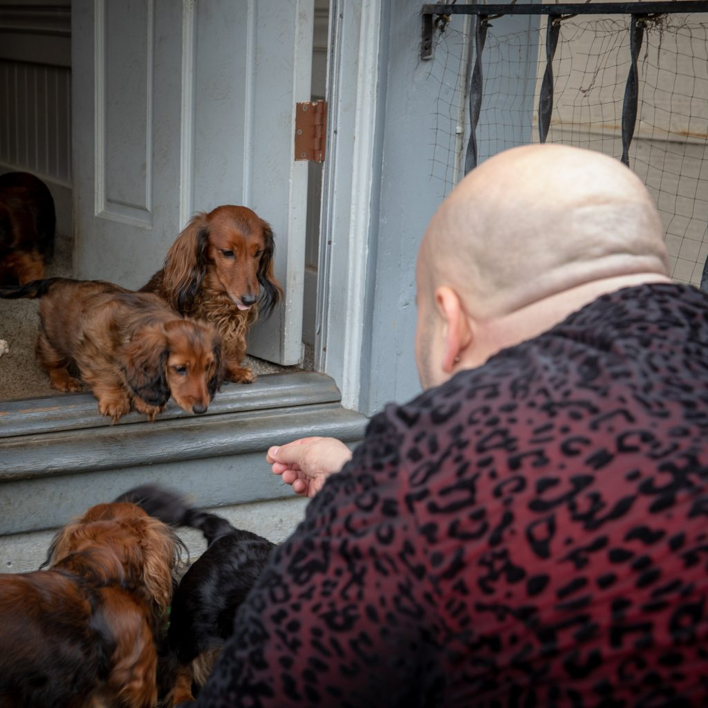 Aurora and Apex just inside the back door while a visitor holds a treat, trying to tempt Aurora to come down the first stair