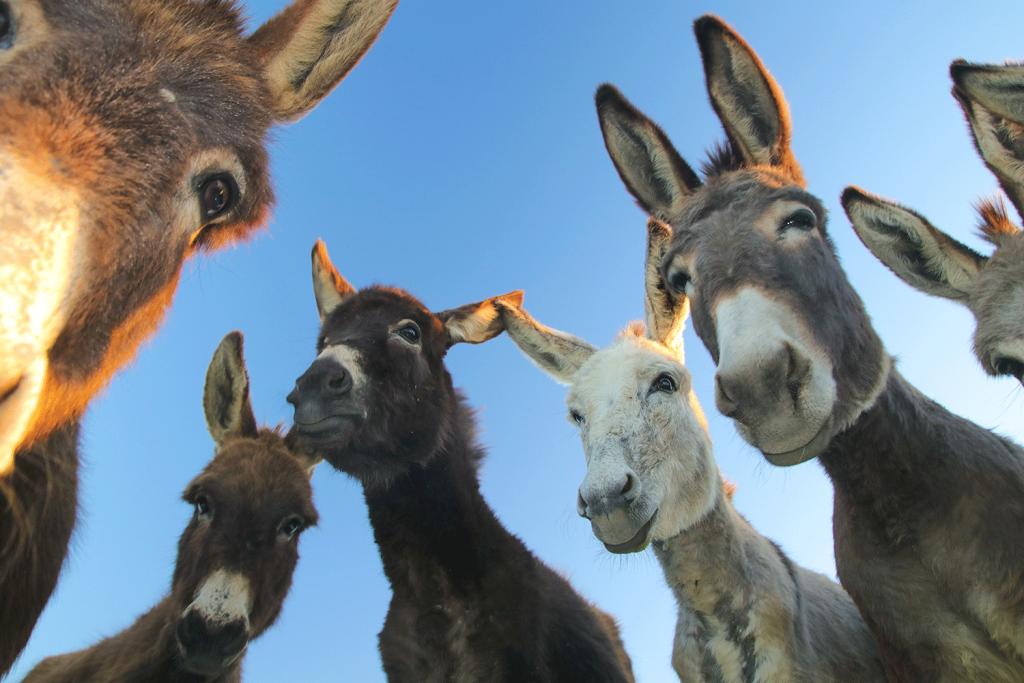 Donkeys Looking at you