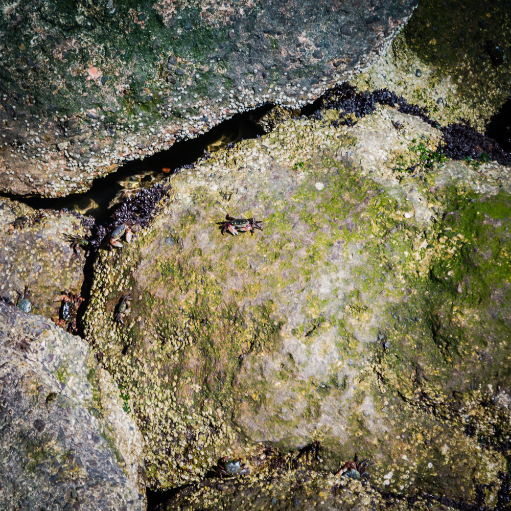 Mission Rock Tide pool and its inhabitants