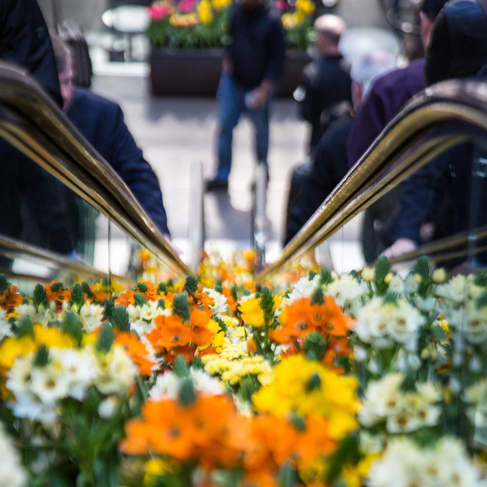 Flowers between escalators