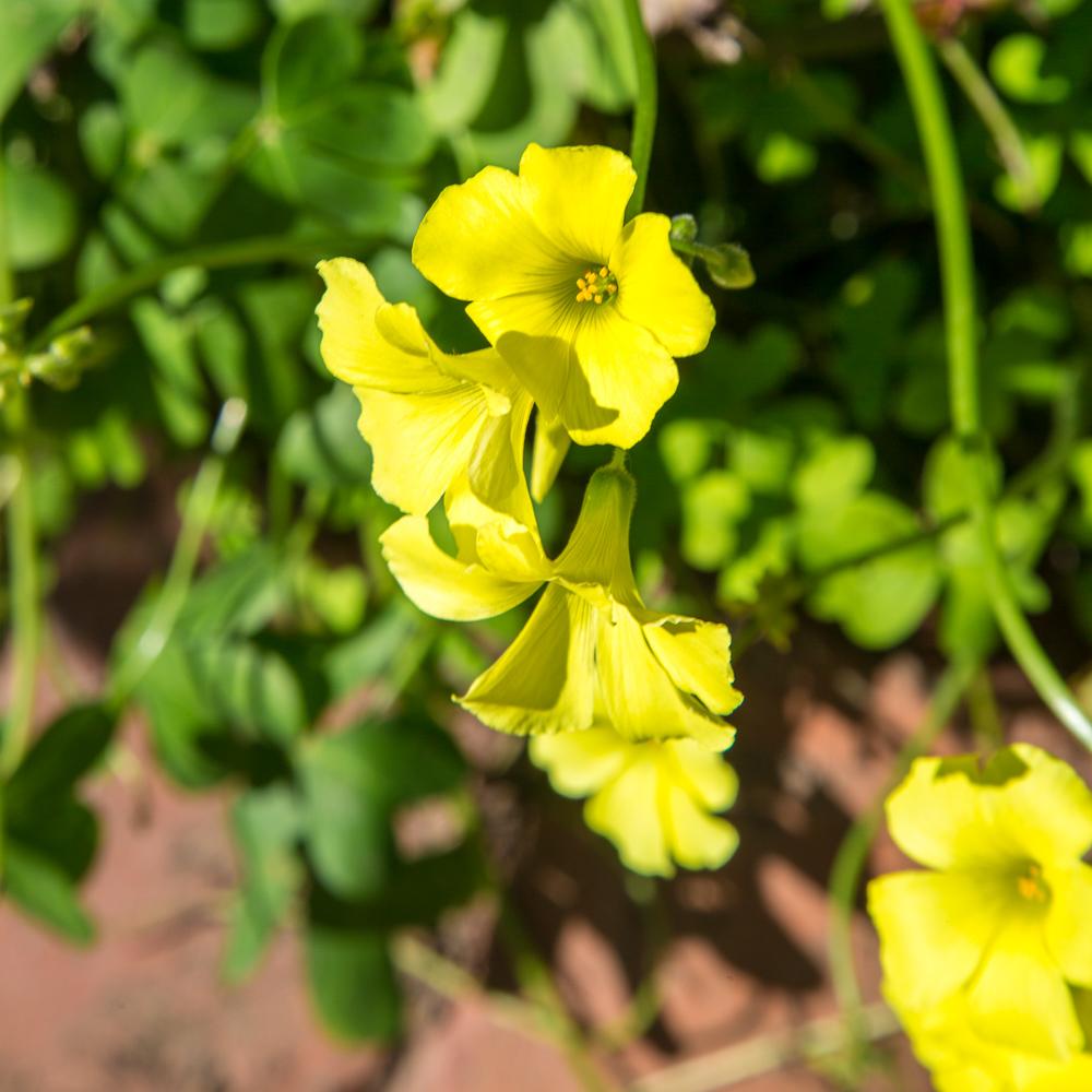 Weeds Blooming